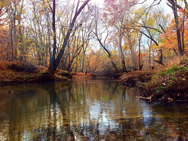 Forest stream photo