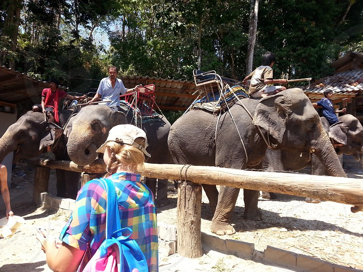 woman wearing blue yellow and purple button up shirt beside elephant during day time photo