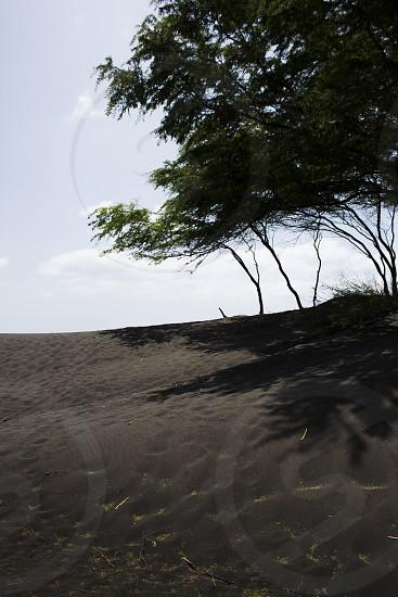 black beach landscape nature tree photo