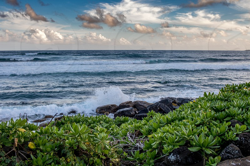 green leaf plant and brown rock in front of ocean during daytime photo