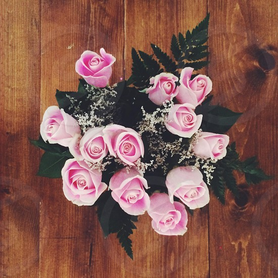pink roses photo
