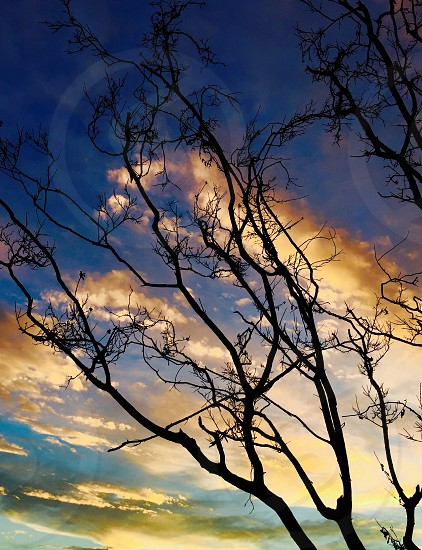 low angle photography of tree branch during dawn photo