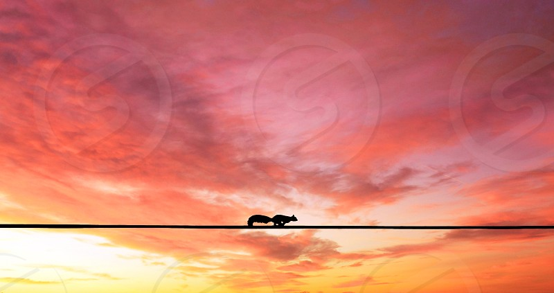 Squirrel against pink coral sky photo