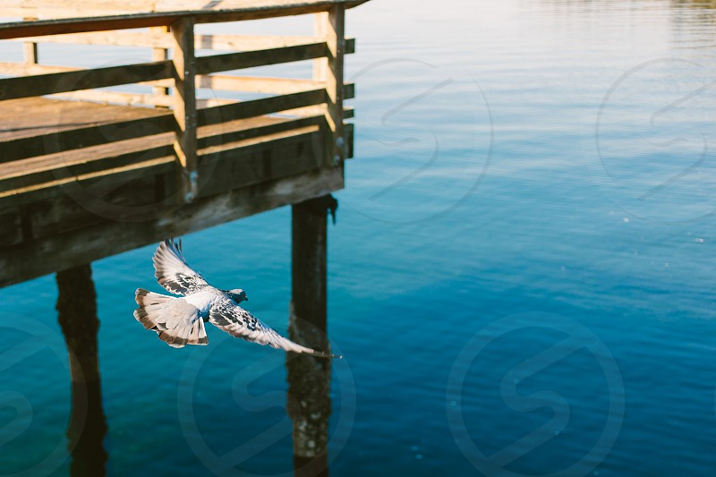 Sea ocean Pnw Seattle bird vsco pier marina redando  photo
