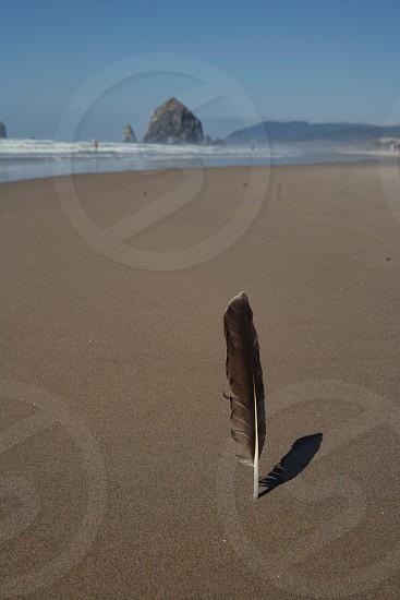 Feather beach coast Oregon Portland Haystack rock hipster sand ocean blue rock photo