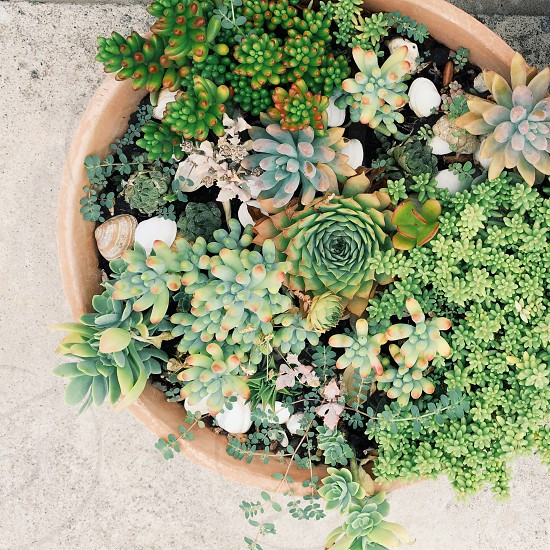 green succulents in closeup photography photo