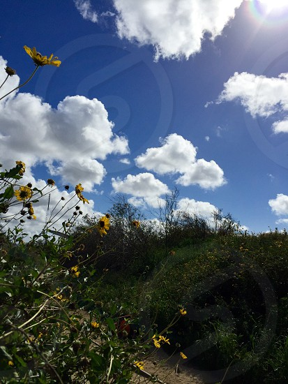 Outdoors. Sun. Flowers. photo