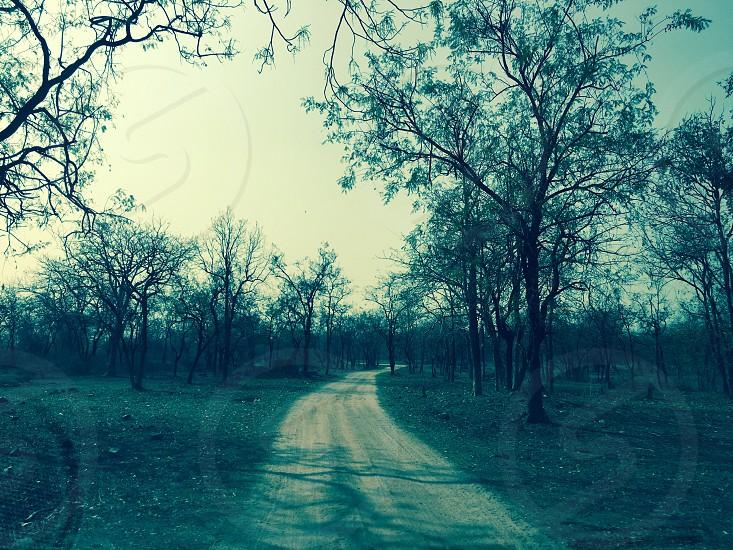 Ken Gharial Sanctuary Khajuraho Madhya Pradesh India photo