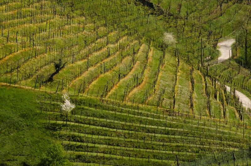 rice terraces photography photo