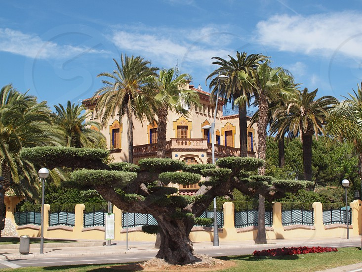 Salou Tarragona. Spain An avant garde villa among the palms with a strange pineda tree in the foreground photo