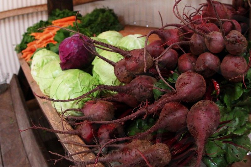 Beets cabbage spinach carrots cilantro and organic vegetables at organic farm  photo