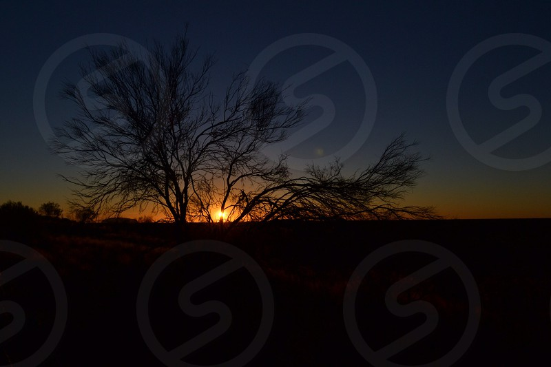 Sunrise with Tree Silhouette  photo