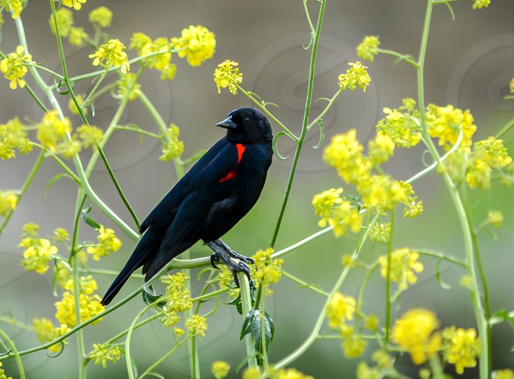 black short beaked bird on yellow flower tree photo