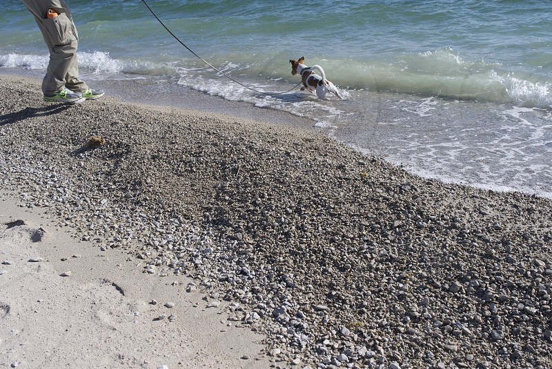 vacation beach activity movement male dog waves jack russel gravel sand footprints photo