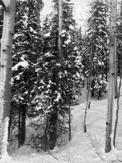 Colorado snow photo