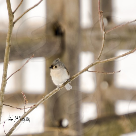 Winter birds outdoors photo