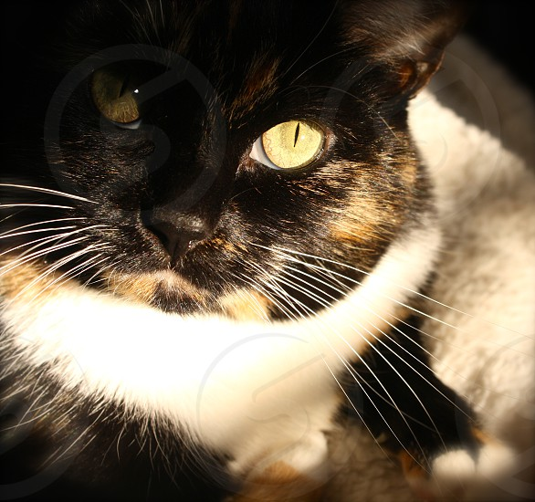 calico cat on textile photo