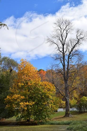 Beauty in Upstate NY photo