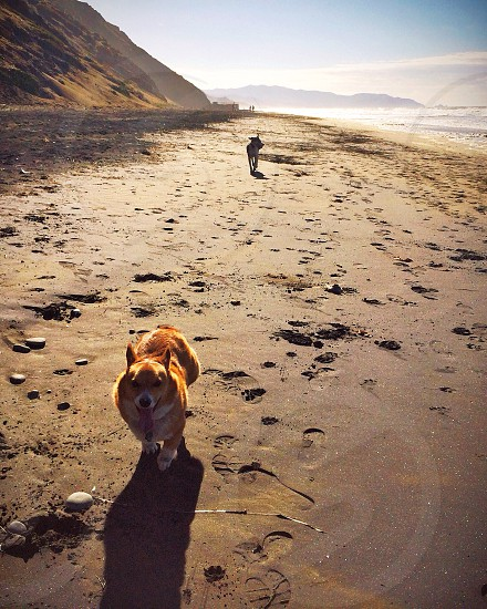Fort Funston beach photo