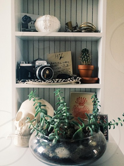 potted green plant photo