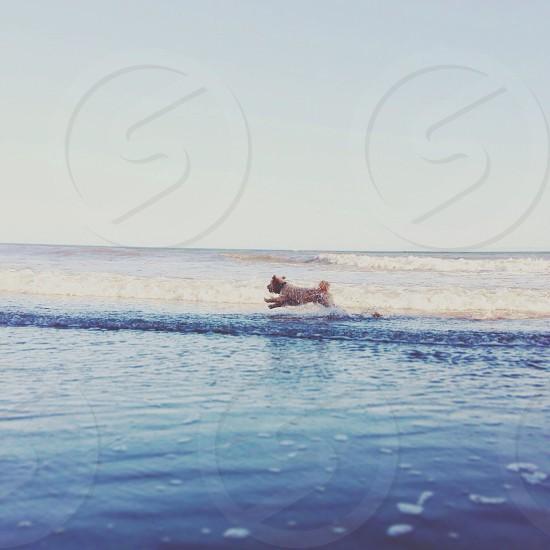 Flying ocean dog photo