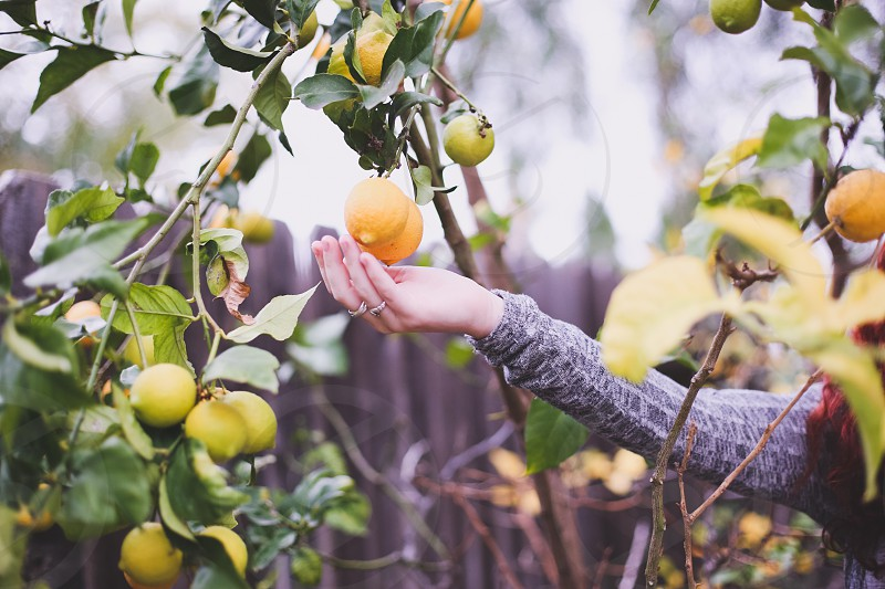 person wearing gray sweater trying to catch yellow round fruit photo
