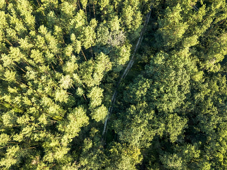 Beautiful aerial view of a drone of deciduous forest with a dirt road on a summer day. Nature conservation concept.Top view photo