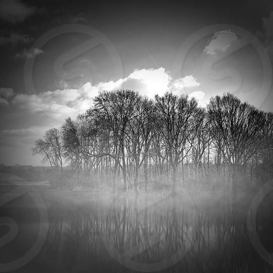Black and white trees reflection mist fog water lake mono peaceful photo