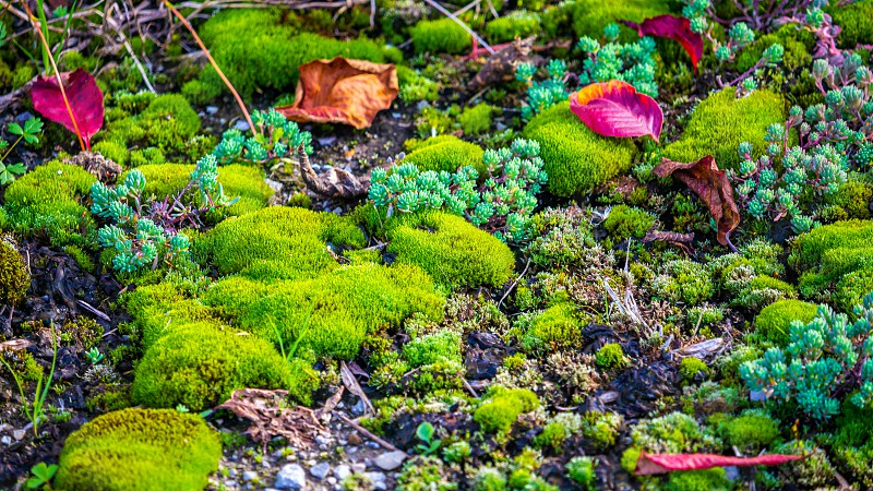 A close-up view of patches of moss and low ground-dwelling plants shows an almost alien landscape. photo