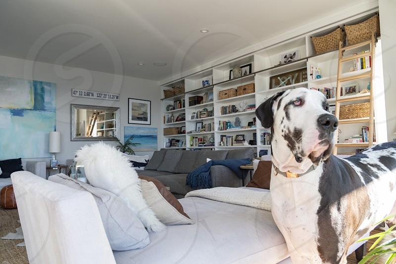 Beautiful beach home living room photo