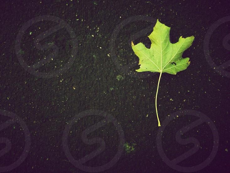 Autumn leaf in Colorado. photo