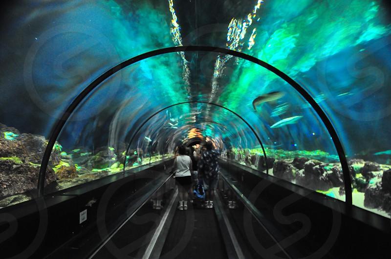 group of people walking on aquarium photo