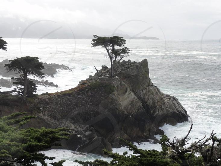 Lone Cypress. photo