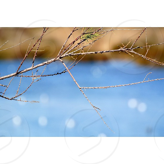 shallow focus photography of brown tree branch photo