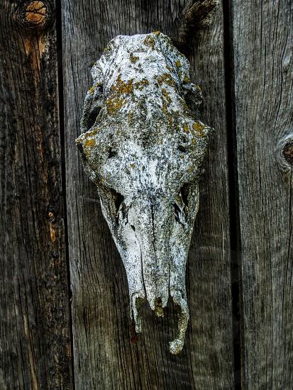 Skill bone old mossy texture photo