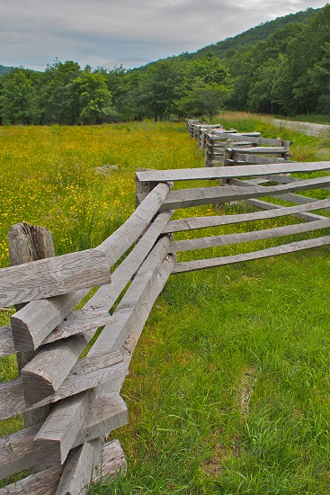 Zig Zag fence with mountain in background. Springtime. Wildflowers. Yellow. Green. Wood. Weathered wood. photo