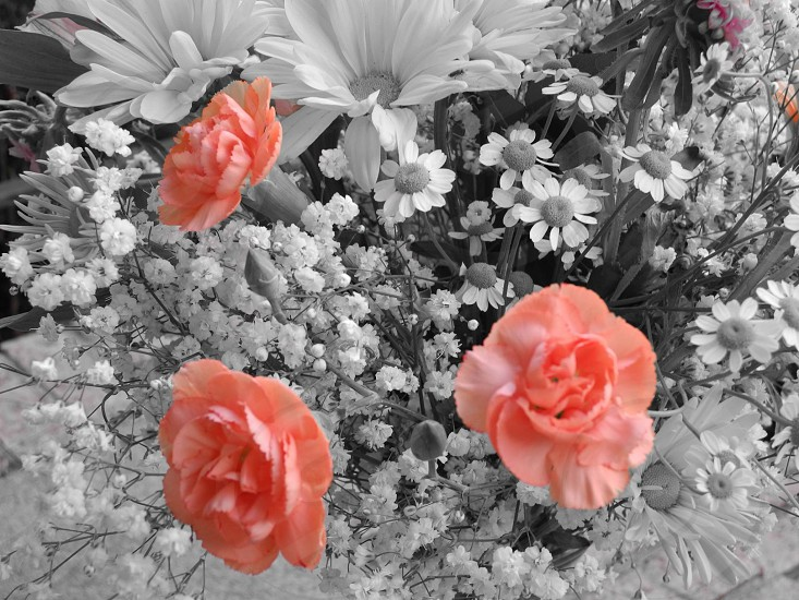 flower bundle selective photo photo