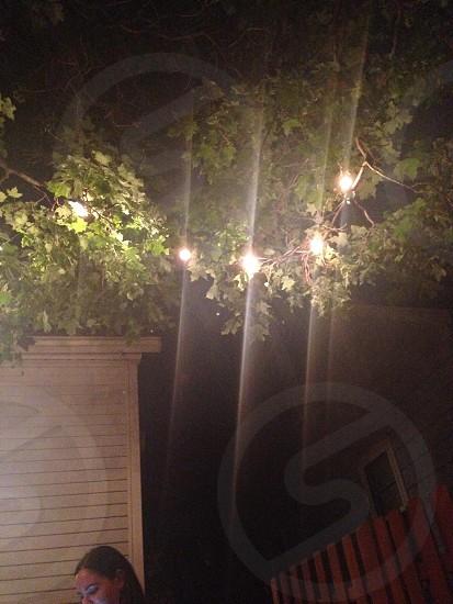 backyard at midnight photo