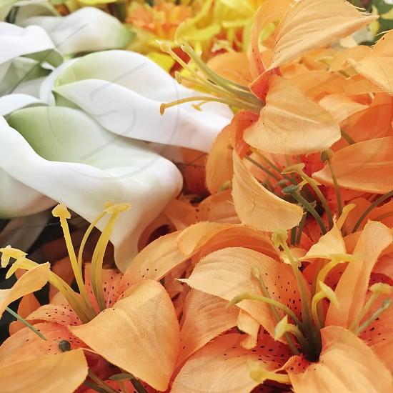 white and orange flowers in macro shot photo