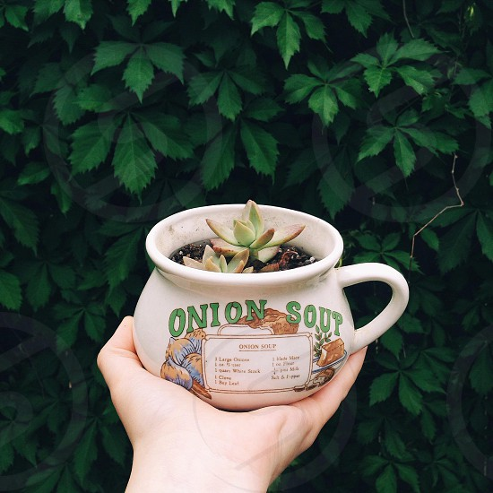 succulent plant on onion soup printed ceramic cup photo