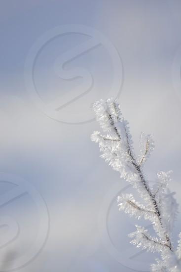 A taste of snow - winter - snow - cold - blue - white  photo