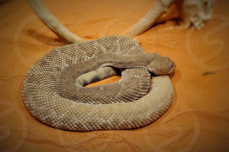 gray snake on brown sand photo