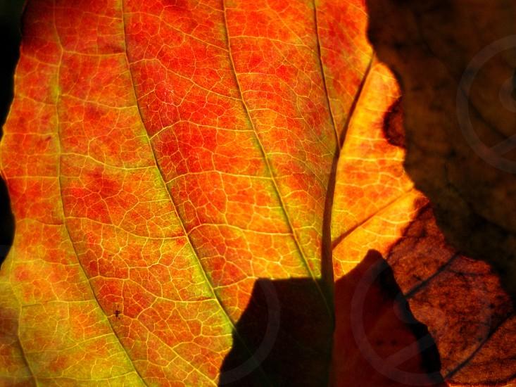 Fall autumn fall foliage foliage autumn leaves fall leaves colorful leaves fall leaf photo