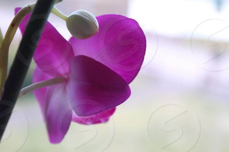 purple flower in full bloom photo