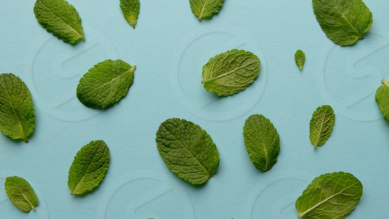 Creative pattern of fresh green mint leaves on a blue background. Natural background.Flat lay photo