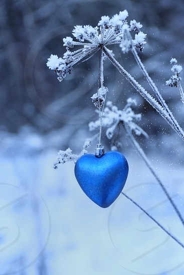 Winter weather forest blue heart photo