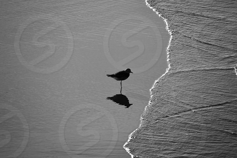 bird standing on seashore photo