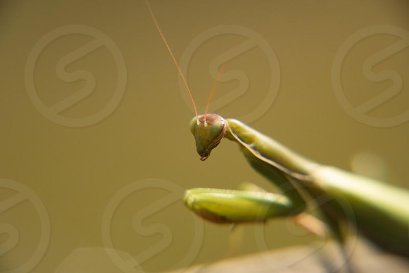 Mantis Style photo