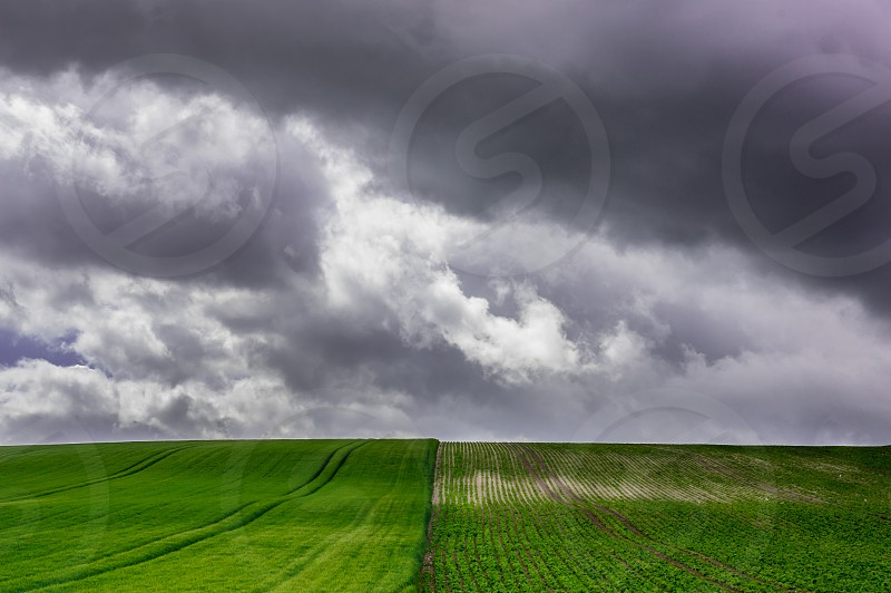 Field crops sky clouds farming countryside  photo