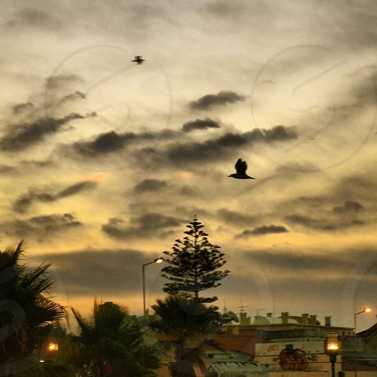Fly little bird fly. photo